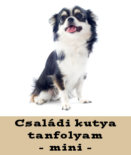 Családi kutya tanfolyam - mini
