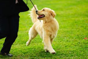 Családi kutya tanfolyam 1