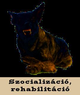 Szocializáció, rehabilitáció