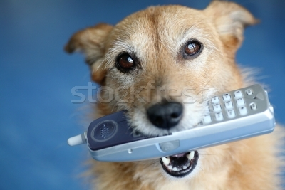 602795_kutya-telefon-száj-aranyos