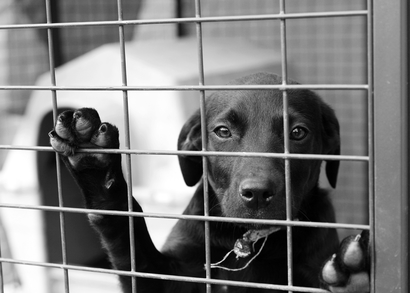 Állatvédő szervezetek segítése